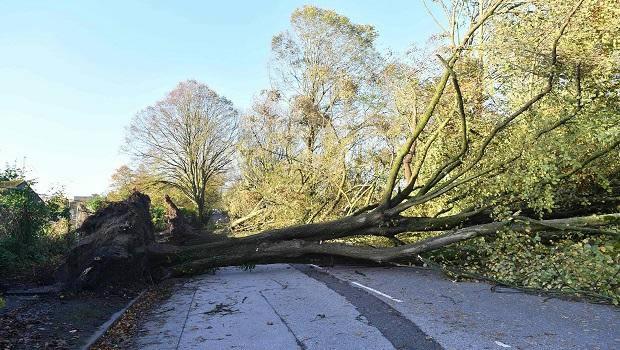 Tree Down Kinsale